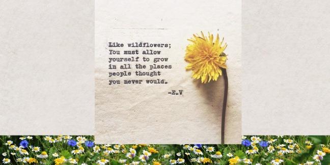 wildflower-range-sivalya
