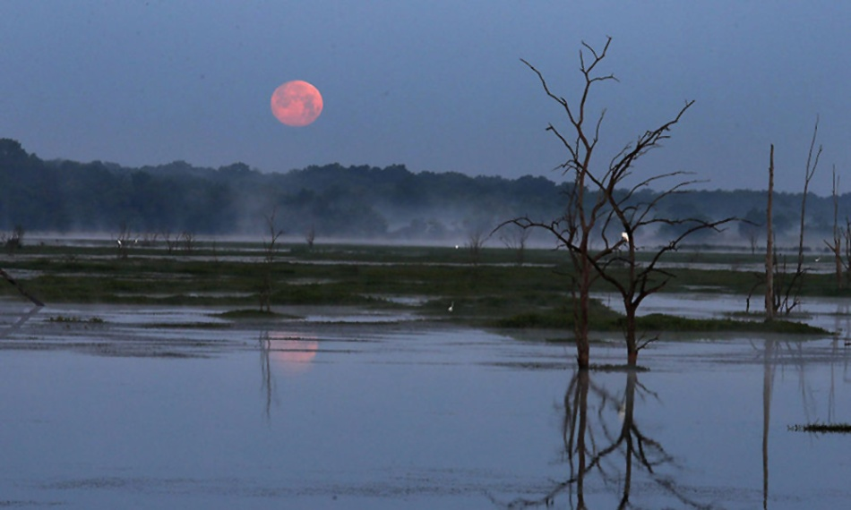 actual pink moon photo